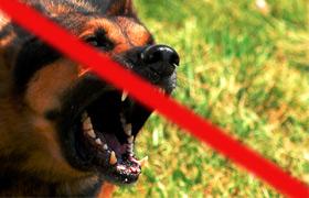 Odstraszacze psów opinie