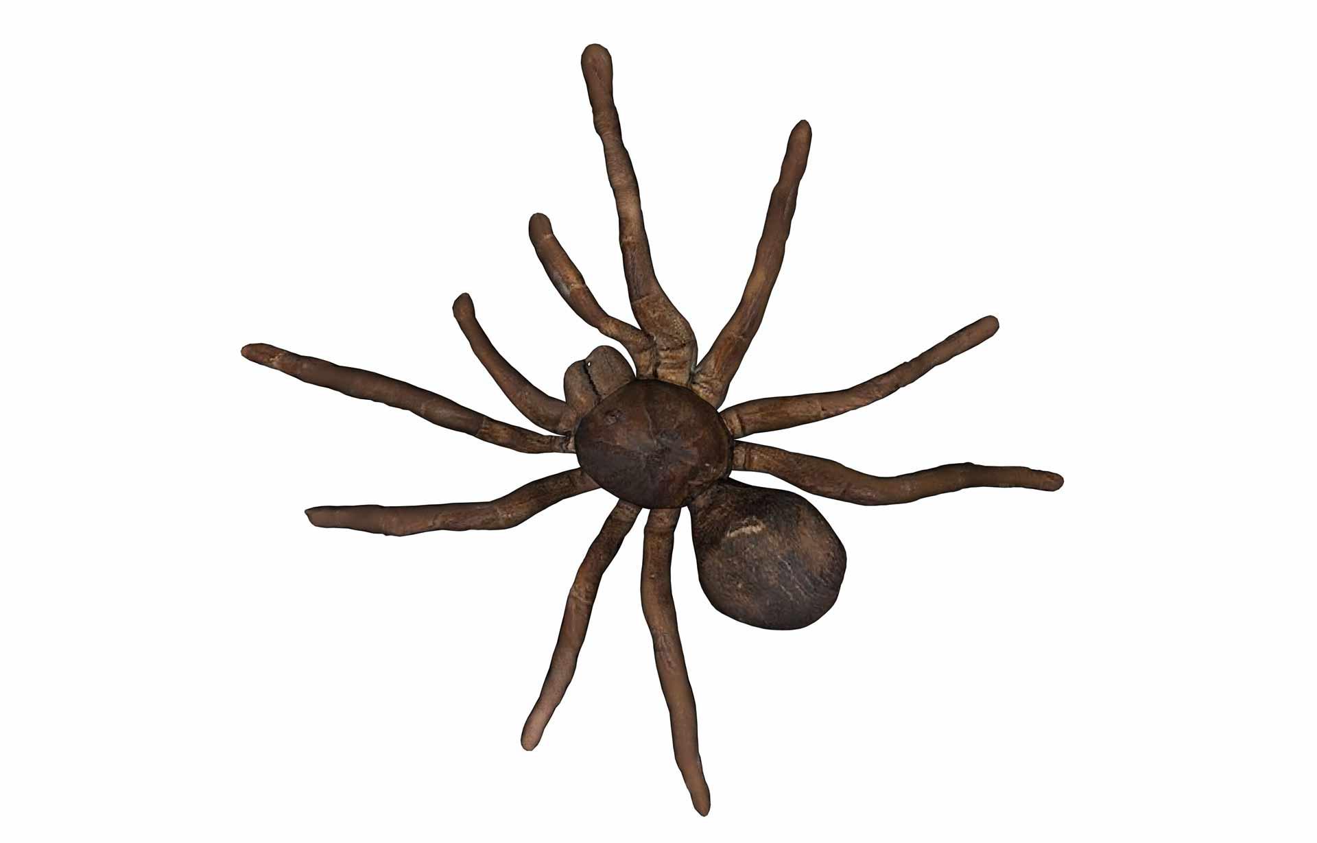Odstraszacze pająków opinie